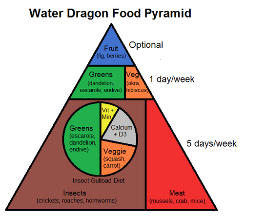 Water Dragon Food Pyramid