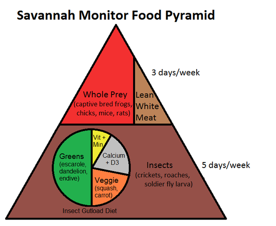 Savannah Monitor Food Pyramid