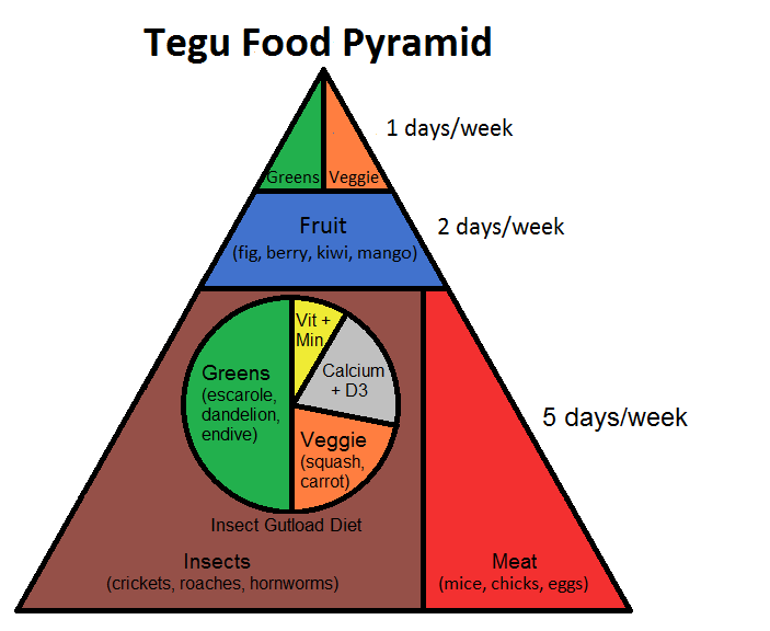 Tegu Food Pyramid
